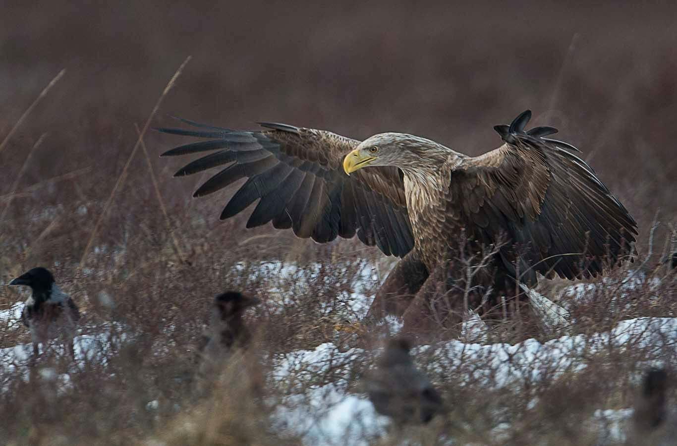 Bilder på rovfåglar
