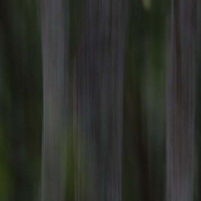 Trädstammar i skogen © Photo: Roger Vikstrom