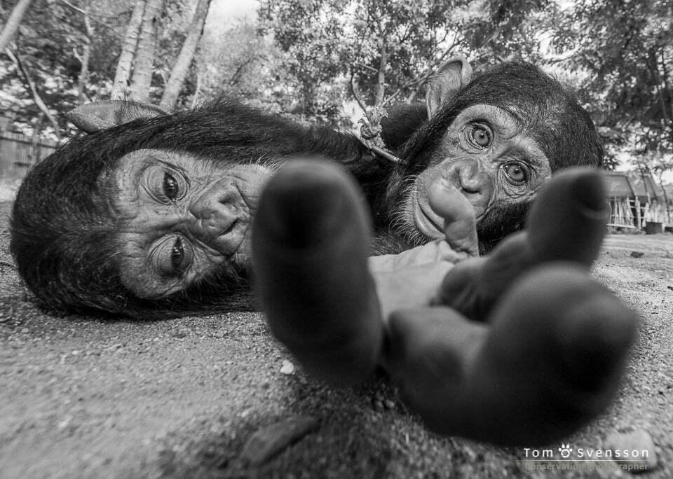 Bevarandefotograf ger djuren en röst