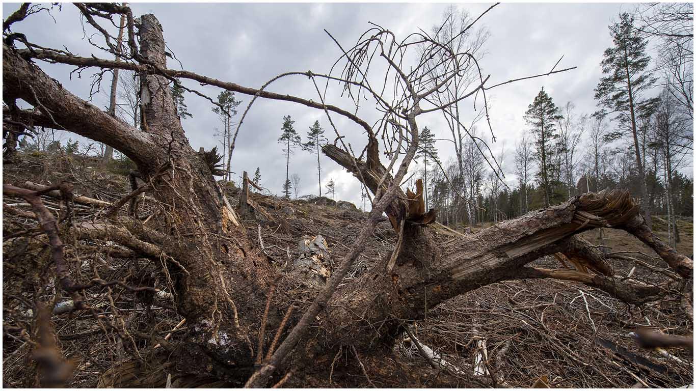 Rädda Skogen